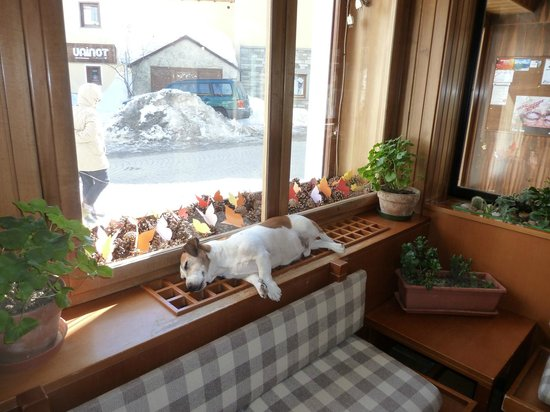Hotel Marmore: Whisky the guard dog on duty