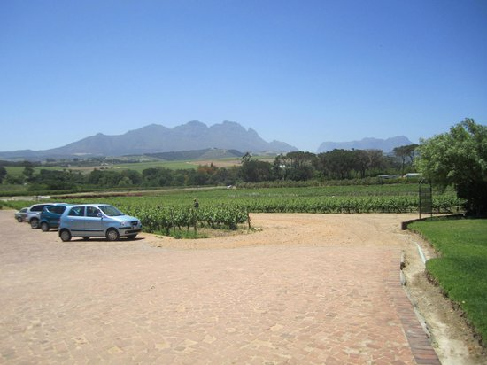 Stellenbosch, Südafrika: View from vineyard