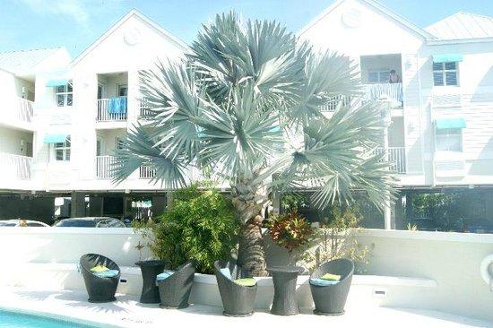 Silver Palms Inn: Silver palm tree by pool area