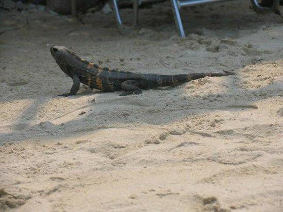 Media Luna Resort & Spa : Beach Visitor