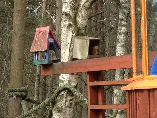 Glenmore Cafe: red squirrel view