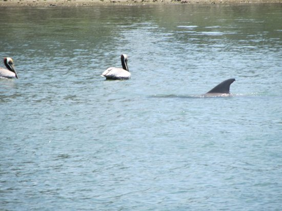 Ponce de Leon Inlet Lighthouse & Museum: Dolphins feeding