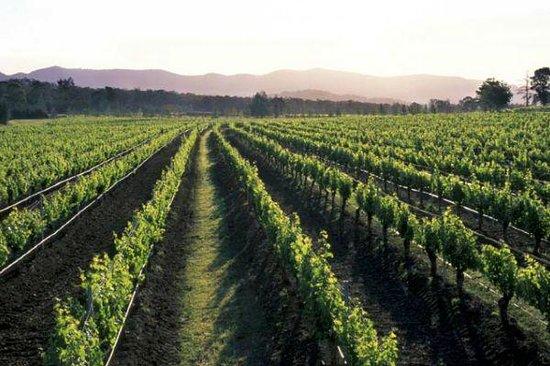 Lake's Folly Vineyard