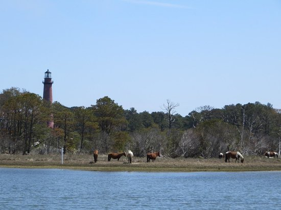 Assateague Beach: wild ponies