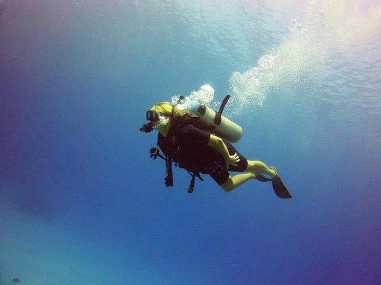 Under The Sea Picture Of Living The Dream Divers Seven Mile Beach TripAd