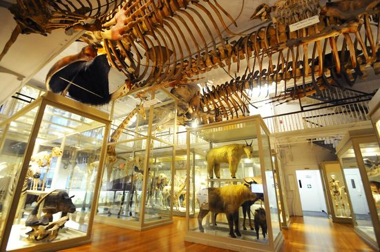 Cambridge, MA: The Great Mammal Hall at the Harvard Museum of Natural History photo (c) Alex Jaffe