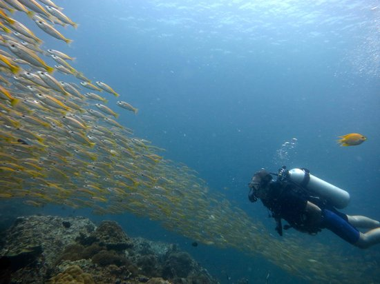 Bangtao Dive Center: large schools of fish encountered