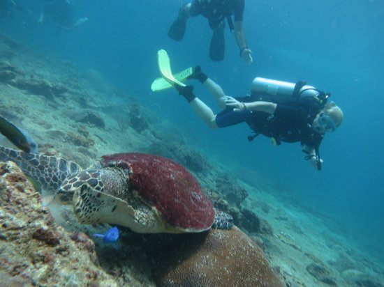 Bangtao Dive Center: turtle