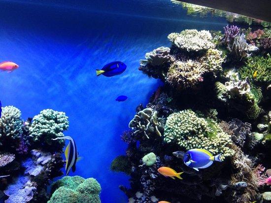 Jellyfish Picture Of Monterey Bay Aquarium Monterey