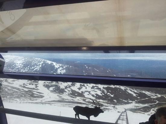 CairnGorm Mountain: Funicular