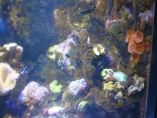Fish tank - Picture of Istanbul Sea Life Aquarium ...