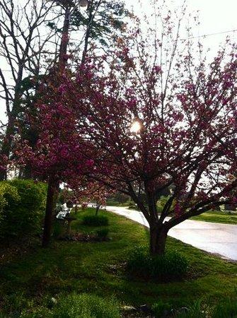 Riverside Cemetery : Spring 2013