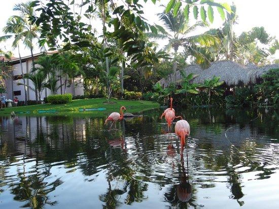 Natura Park Beach - EcoResort & Spa: the flamingo lagoon