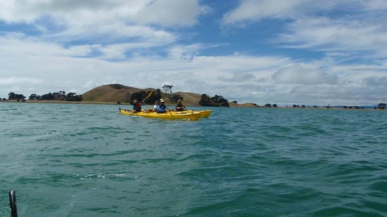 Auckland Sea Kayaks: Fantastic Day - 1/2 day Motukorea (Brown's Island) trip