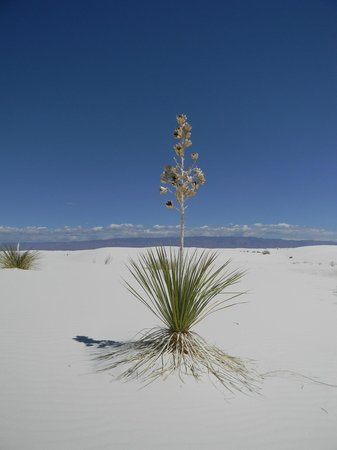 Alamogordo, NM: White Sands views
