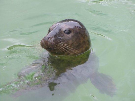 Cornish Seal Sanctuary: A happy seal