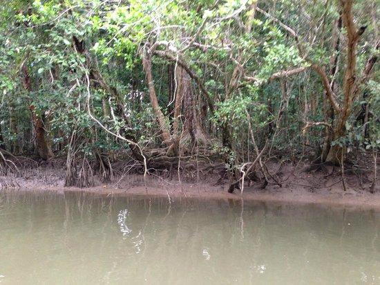 Dan Irby's Mangrove Adventures: Mangrove