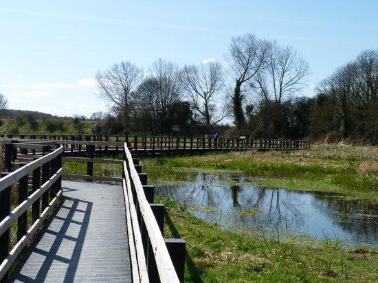 Hambrook Marshes: Duckboard walk