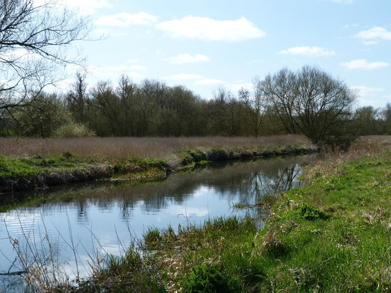 Hambrook Marshes: Great Stour River