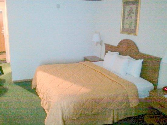 Comfort Inn Circleville: Bedding comfortable