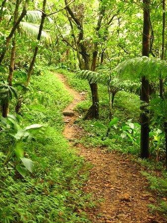 Perdu Temps Trail