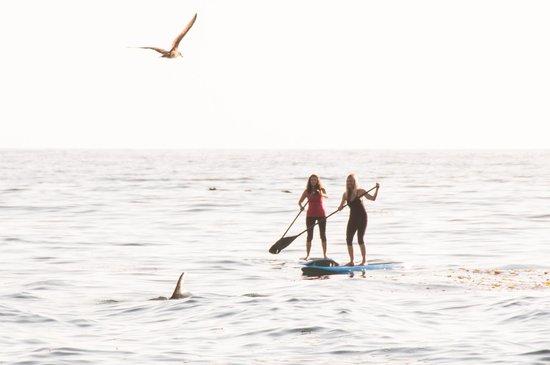 Saint Simons Paddleboard & Kayak (SSI SUP): Tons of dolphins around this morning!