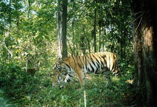 Thungyai Huai Kha Khaeng Wildlife Sanctuaries Thailand