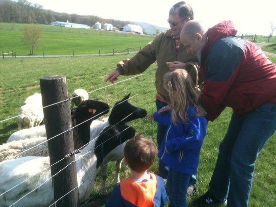 Airy Hill Farm B&B: Mark with kids feeding sheep