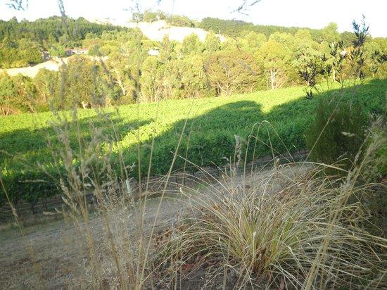 the vineyard in autumn bild fr n gisborne peak winery. Black Bedroom Furniture Sets. Home Design Ideas
