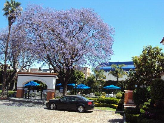 Hotel Flamingo Inn: Las jacarandas son clásicas en los meses de marzo