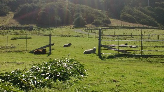 Howard Creek Ranch: This crew mows the lawn.....