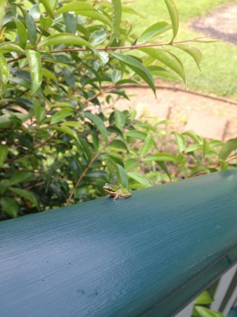 Crabbes Creek Cottages: my tiny green frog friend...