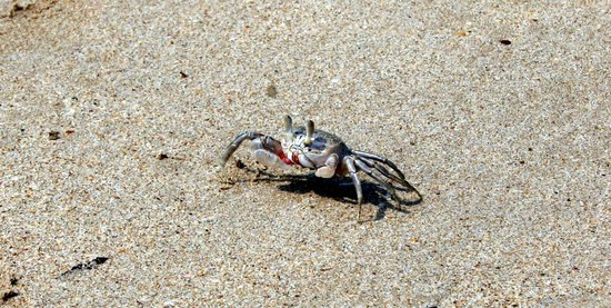 Monkey Island Resort: the crabs are funny to watch them digging