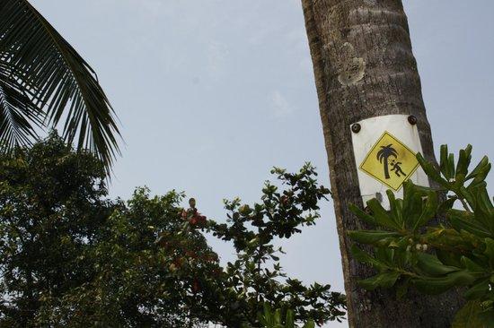 Monkey Island Resort: be careful!