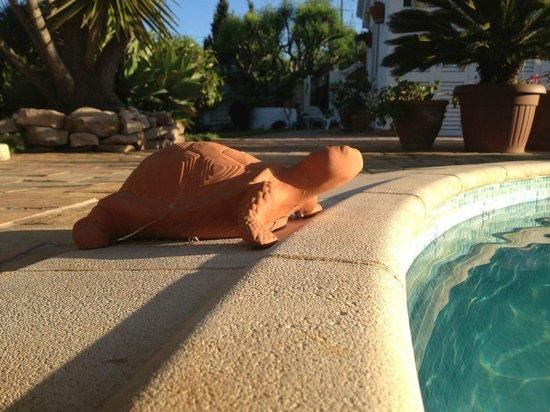 Casa Amarela : Schildpad aan het zwembad