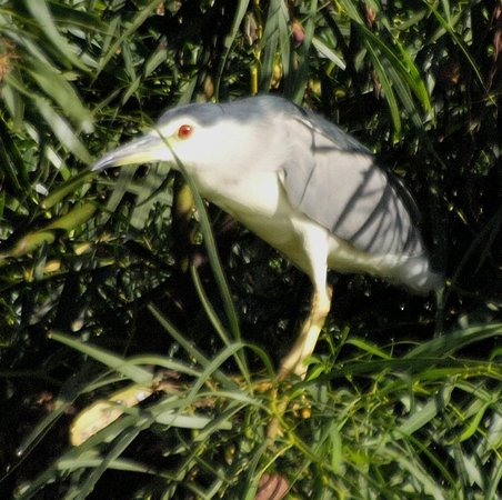 Onze Rust Guesthouse: Water bird breeding at lake