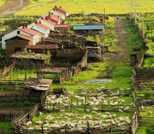 Zhalantun Scienc Resort Photo