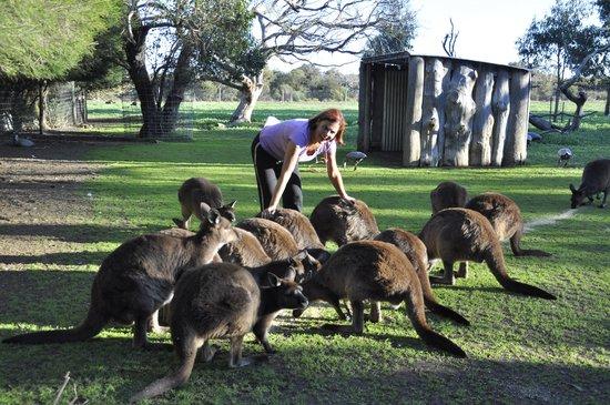 Parndana Wildlife Park: Tutti insieme a pranzo!!