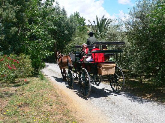 Cortijo Zalamea: Salindo del cortijo así a la Romeria