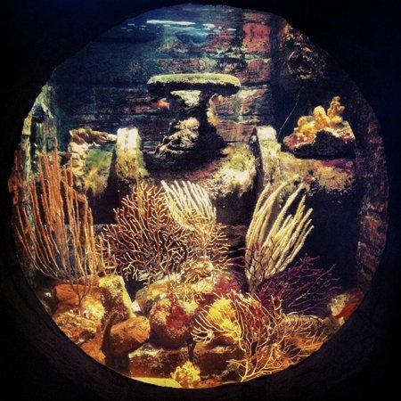 SEA LIFE Oberhausen: Coralli