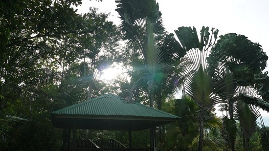 Sepilok Jungle Resort: Sepilok Jungle Lodge