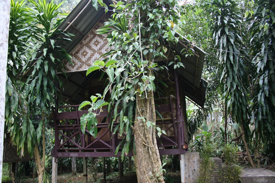 Khao Sok Green Mountain View: A typical bungalow in the world's oldest and most diverse tropical jungle!