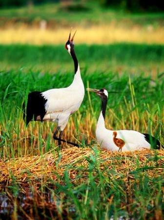 Foto de Tongyu County