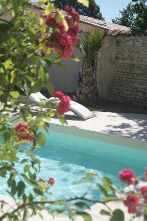 La maison du Baloir : Au bord de la piscine