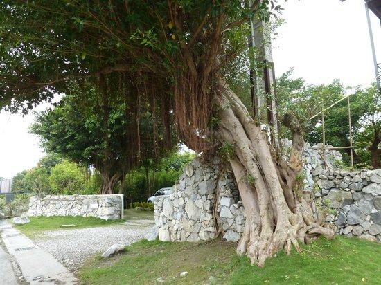 Papaya River B&B: Entrance to car park