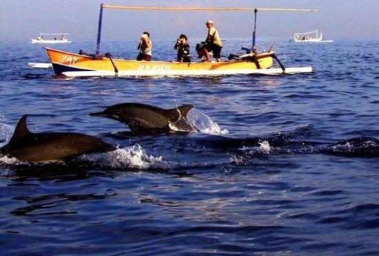 Bali Dolphin Tour (Denpasar, Indonesia): 2017 Reviews ...