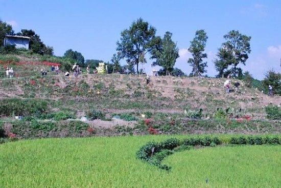 明日香村, 奈良県, 彼岸花のころの稲渕棚田