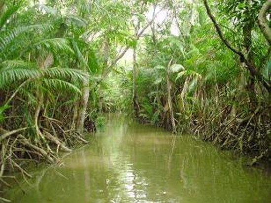 Foto de Ilha do Marajo