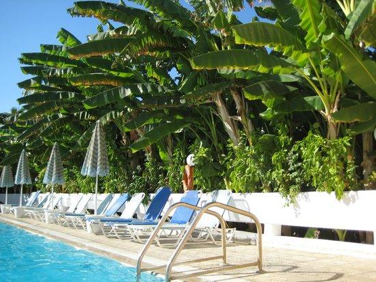 Imperial Hotel: бассейн