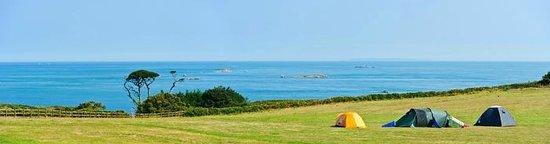 Seagull Campsite: Moss Field 2